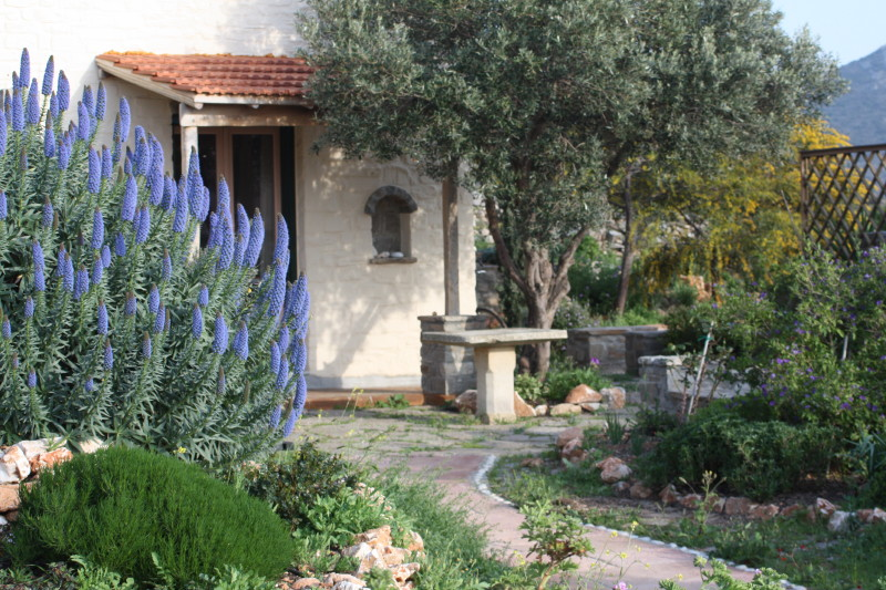 the olive house in spring