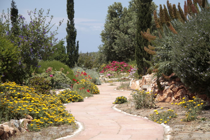 winding path in the garden