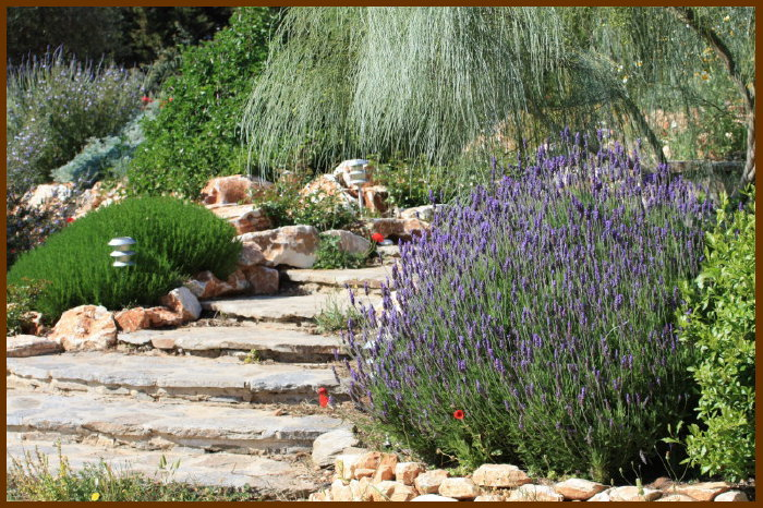 lavender-and-steps_1